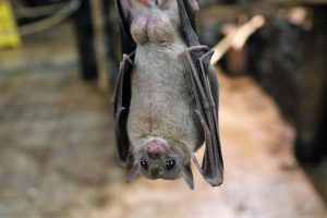 bat hanging upside-down